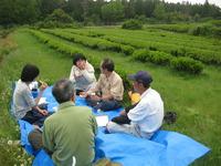 茶園、無農薬茶