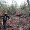 コナラ伐採、夏原グラント助成事業
