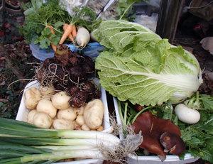 昼食材料、里山×農業コラボ企画
