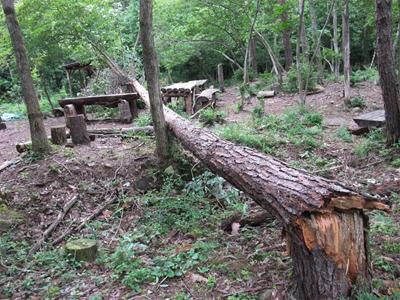 里守隊 オオコバの森 枯松 倒木