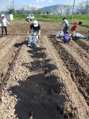大根 無農薬栽培 種まき