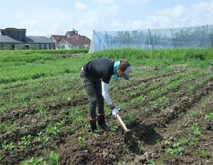 大豆 無農薬栽培 土寄せ