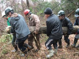 コナラ伐採 運び出し