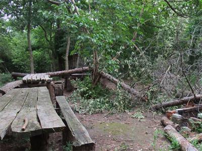 里守隊 オオコバの森 台風 倒木