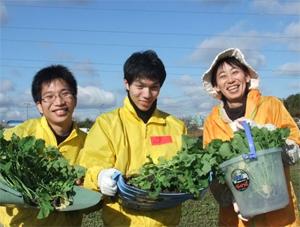 菜種植え付け