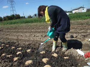 種まき 大根 無農薬栽培