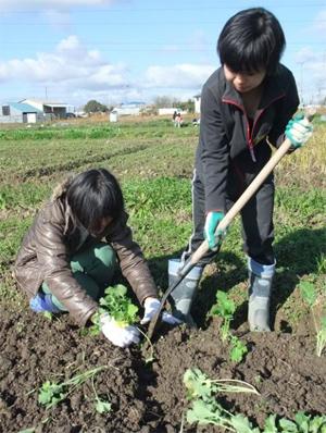 菜種植え付け 損保ジャパンラーニング生