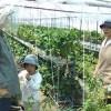 農家の畑de野菜づくり