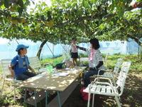 観光なし園、梨収穫