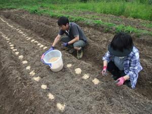 20140628大豆種まき