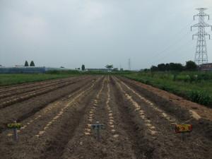 20140629大豆種まき