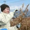 大豆収穫、損保ジャパンラーニング性