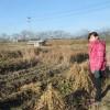 大豆収穫、ともみそさん