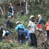 伐採枝処理、IVUSA