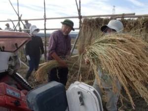 お米の粒をはずす作業_320