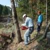 コナラ伐採、伐採講習