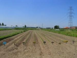 お豆の畑_320
