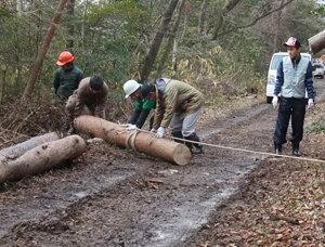 里守隊活動 枯松伐採
