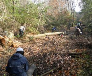 里守隊活動 ナラ枯れ コナラ伐採